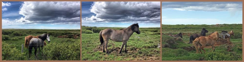 1_Snaefellsnes Horses